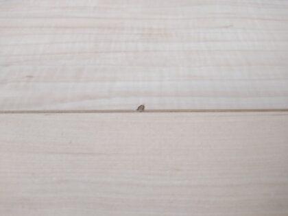 アーネストワンの一戸建て (横浜市) - 床のキズ